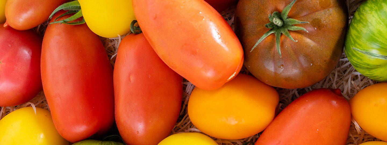 tomate pouliquen